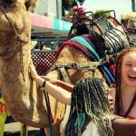 Carnivale-camels